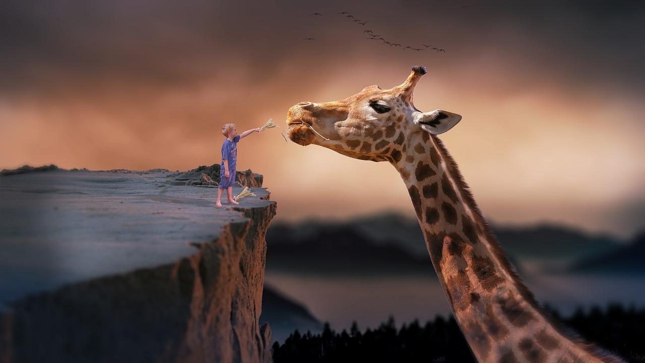 girafa_nova vita
