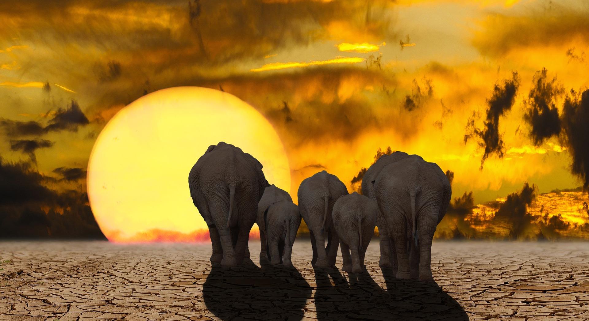elefantes_nova vita